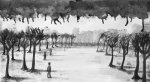 2012 :: Ghost City :: Black ink wash, 41.5x23cm {JPEG}