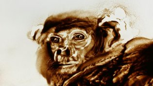 2012 :: Animal face, Ape :: Research for a movie :: Sand drawing